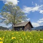 Naturliebhaber und Aktive fühlen sich in der Naturparkregion Reutte besonders wohl.